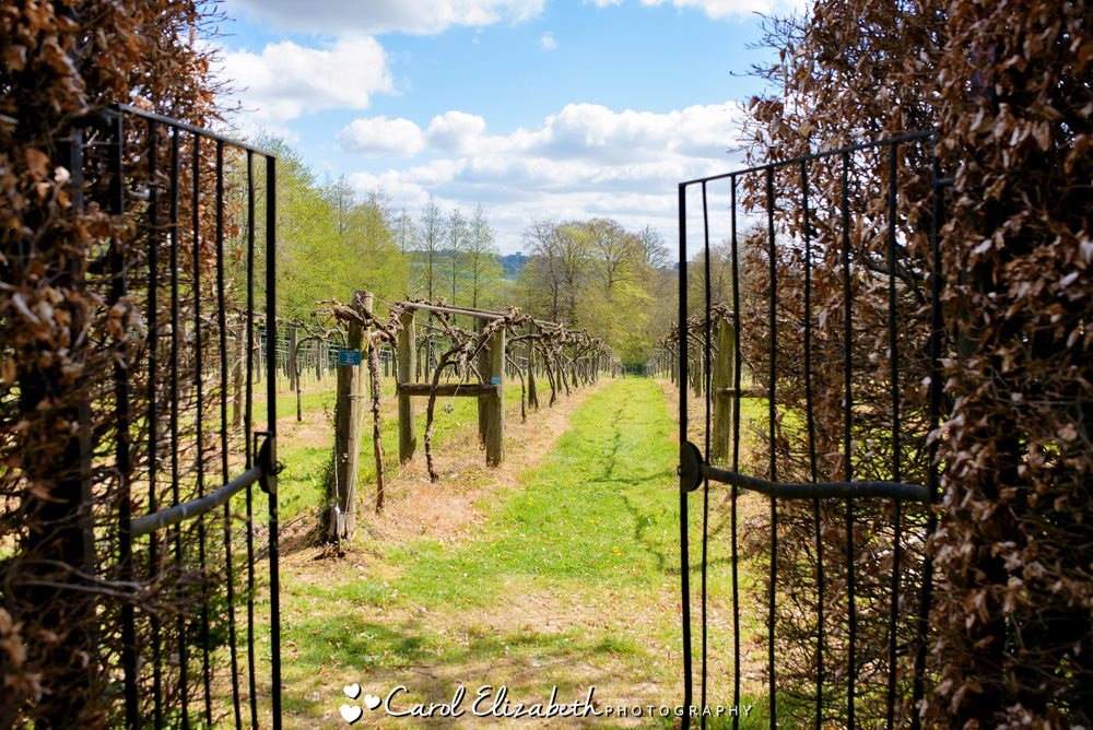 Entrance to the vineyard at Old Luxters