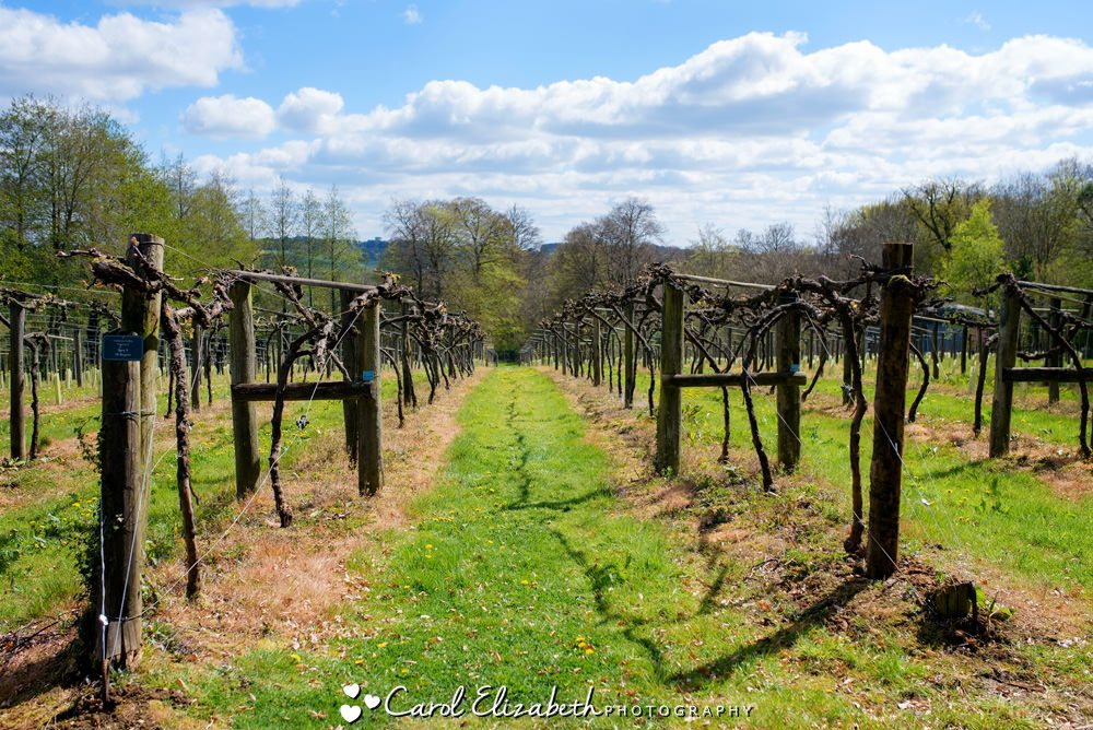 The vineyard at Old Luxters and Chiltern Brewery
