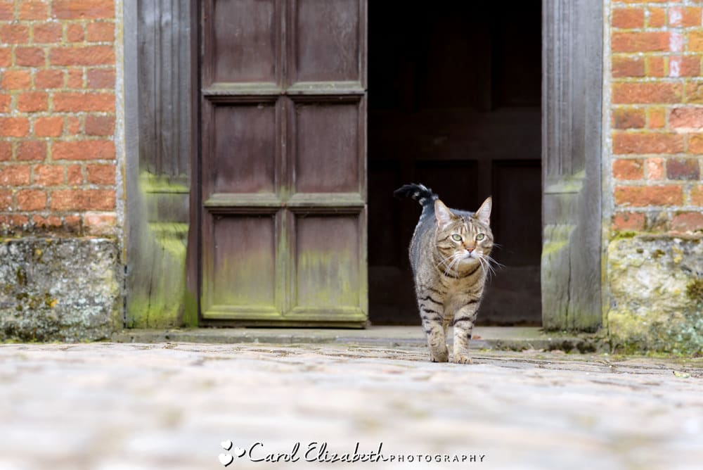 Nether Winchendon House cat